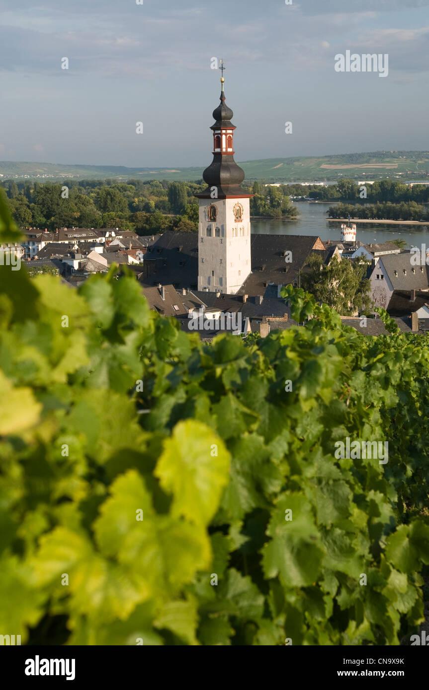 Germany, Hesse, Rudesheim am Rhein, vineyard dominating the Rhine and the bell tower of Rudesheim - Stock Image