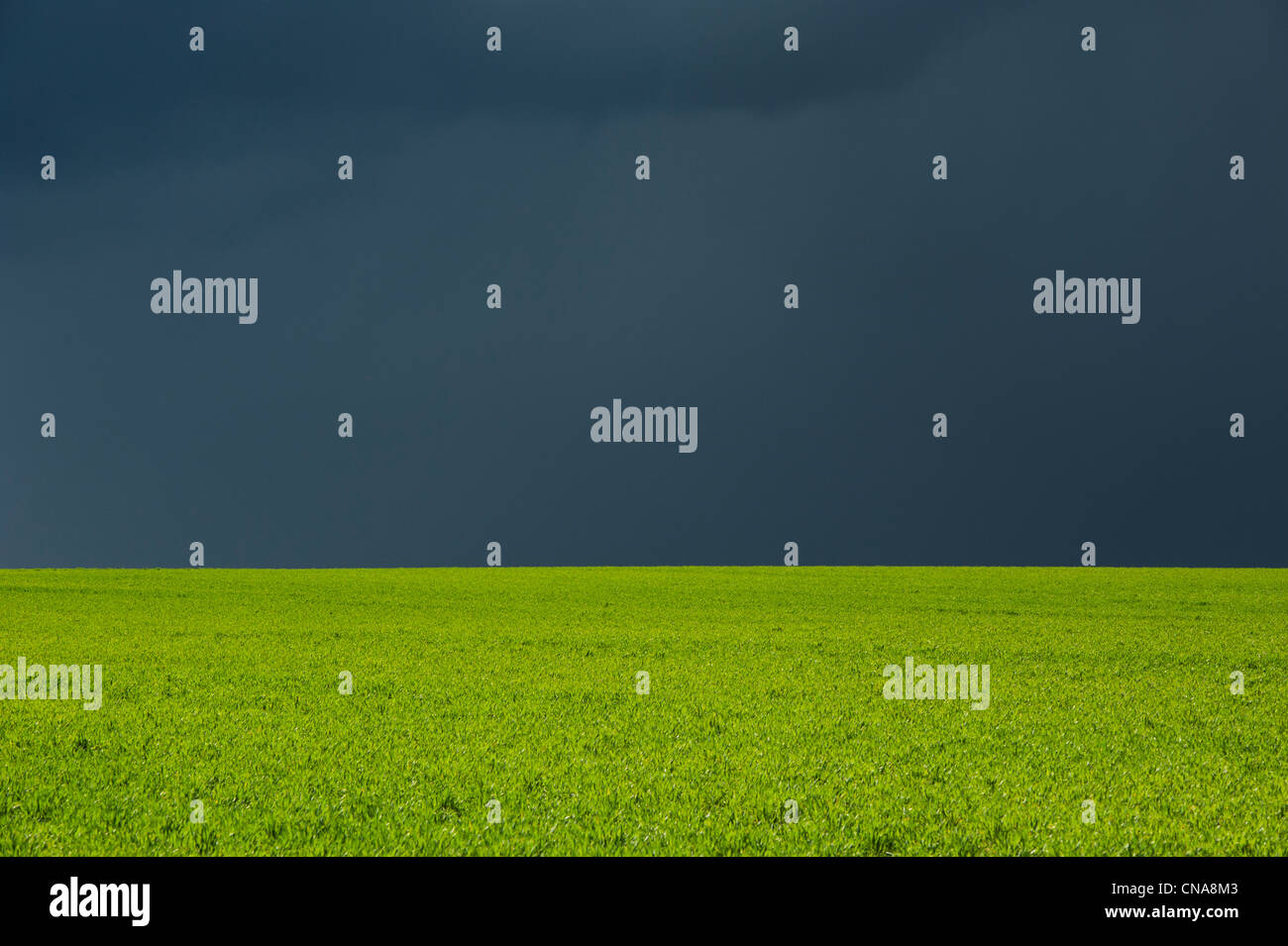Stormy rain clouds over a sun lit wheat field in the English countryside. Oxfordshire, UK - Stock Image