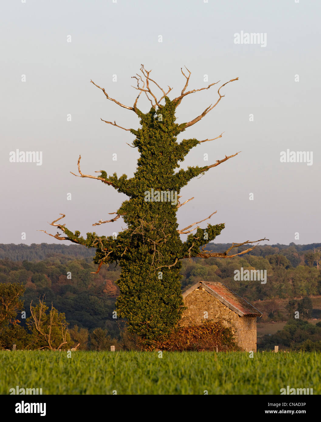 France, Creuse, old garden shed and dead tree - Stock Image
