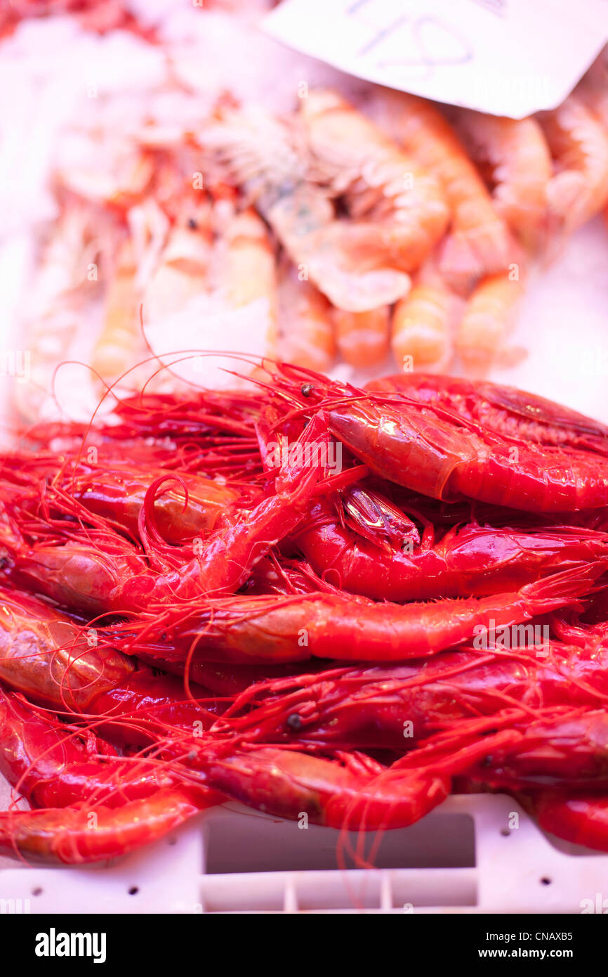 Close up of langoustines for sale - Stock Image