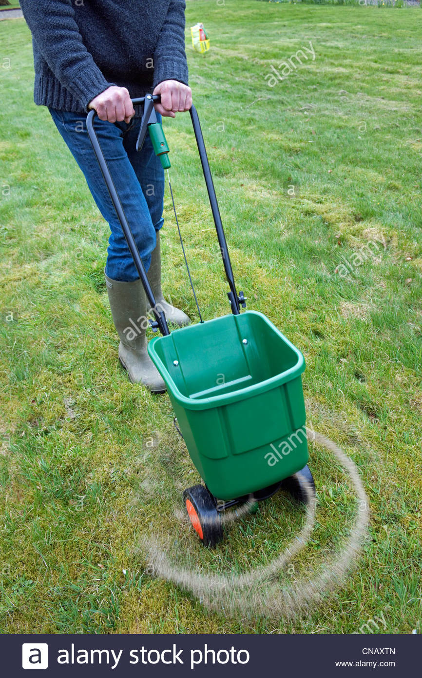 Gardener using a rotary lawn feed spreader - Stock Image