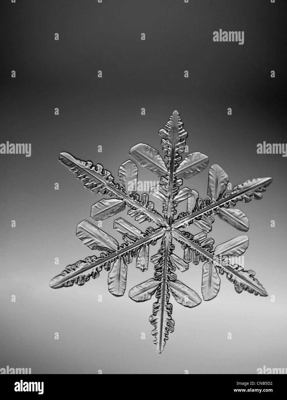 Photo-microscope view of a snowflake with a star shape Stock