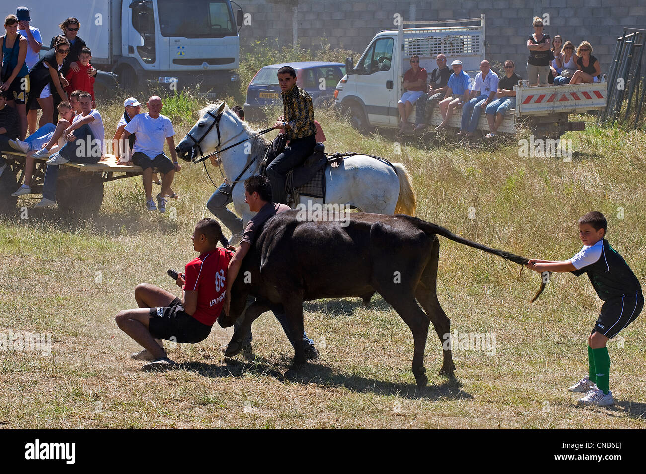 France, Gard, Mus, the Abrivado (release of bulls) consists for the cowboys to escort the bulls from the pastures - Stock Image