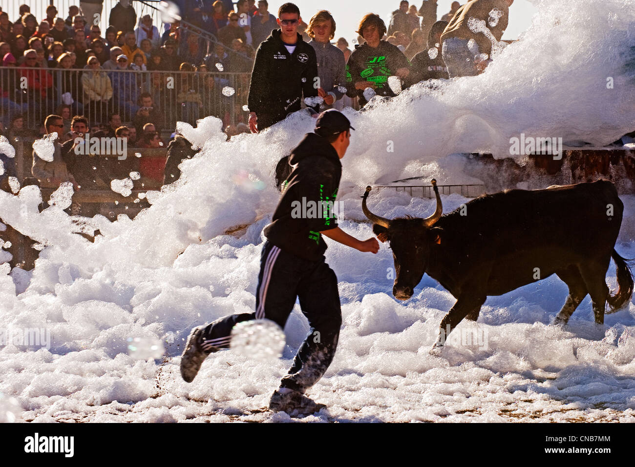 France, Gard, Aigues Mortes, Bull foam game at the foot of the medieval city where the youth exercise in practicing - Stock Image