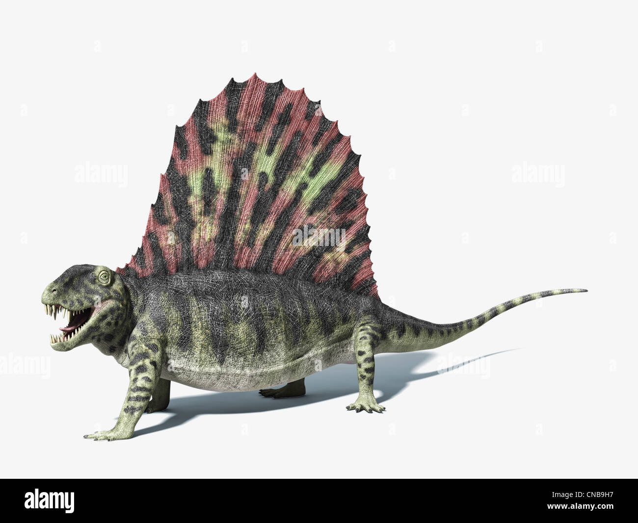 Dimetrodon dinosaur. very detailed and scientifically correct. On white background with dropped shadow and clipping - Stock Image