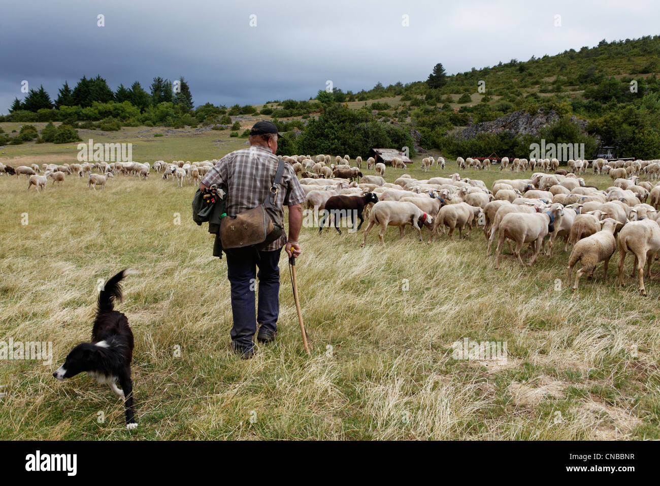 France, Aveyron, Mediterranean agro pastoral cultural landscape, listed as World Heritage by UNESCO, Grands Causses - Stock Image