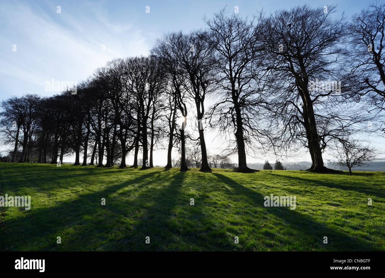 Spring Sunshine through Avenue of Trees at Cricket St Thomas. Somerset. England. UK. - Stock Image
