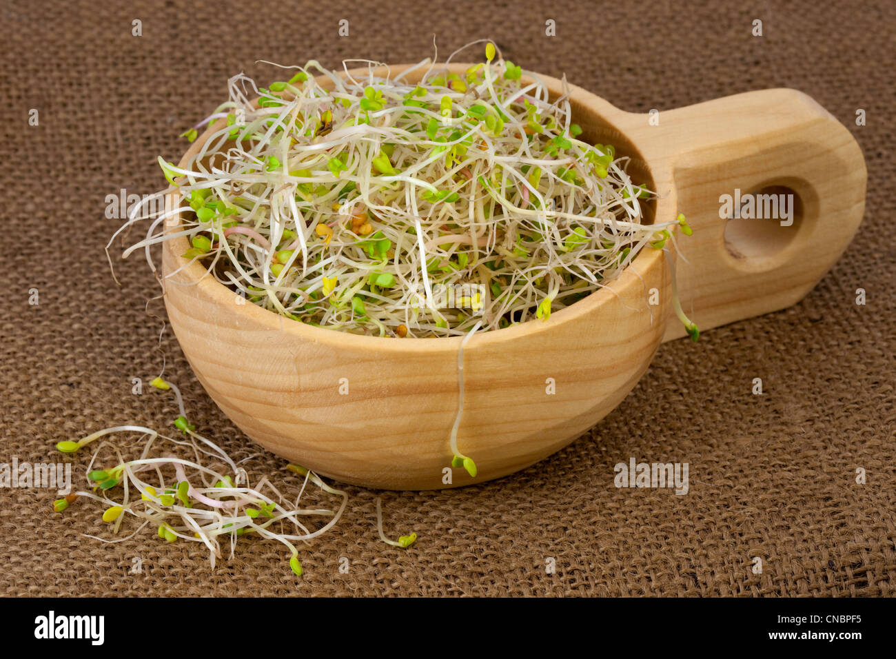 broccoli, radish and clover sprouts in a wooden rustic bowl, burlap background Stock Photo