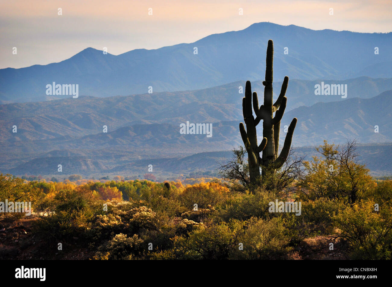 Arizona Desert landscape with cactus in autumn - Stock Image