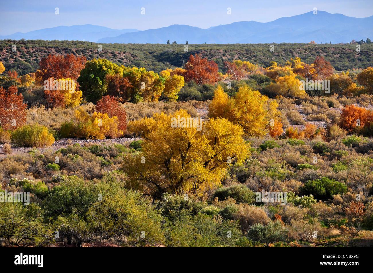 Arizona Desert landscape with cactus in autumn - Stock Image