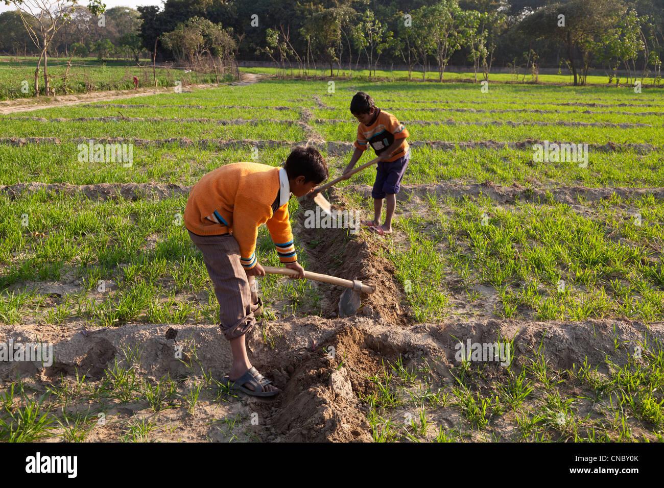 India, Uttar Pradesh, Agra, young boys working in field - Stock Image