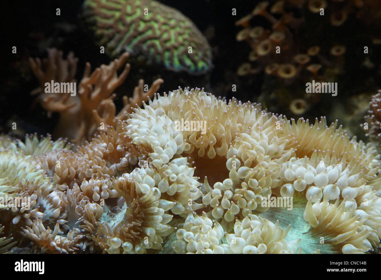 Coral, Coral Coast, Viti Levu, Fiji, South Pacific Stock Photo