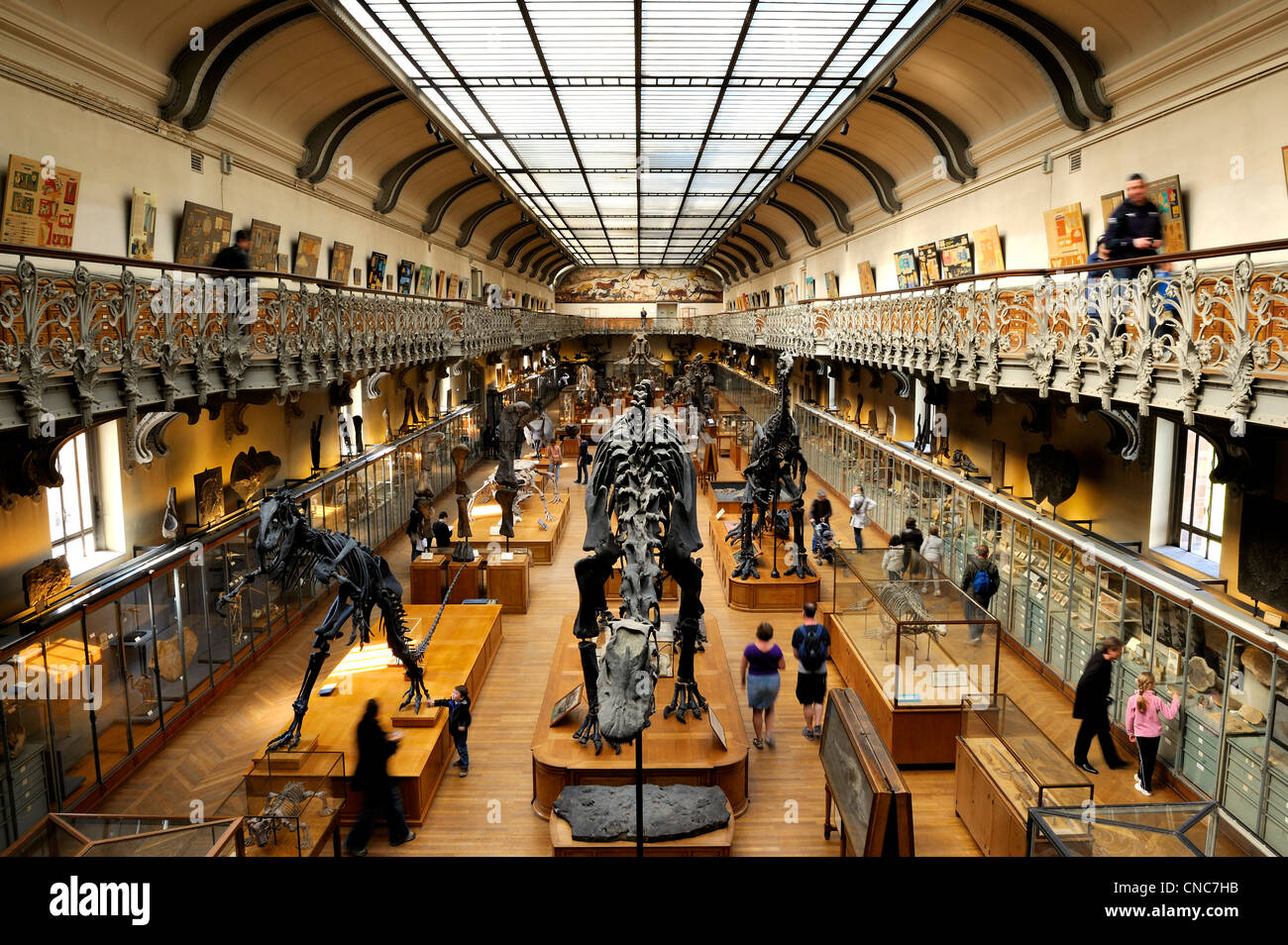France, Paris, the Jardin des Plantes (Plants Gardens), comparative anatomy and palaeontology Galeries - Stock Image