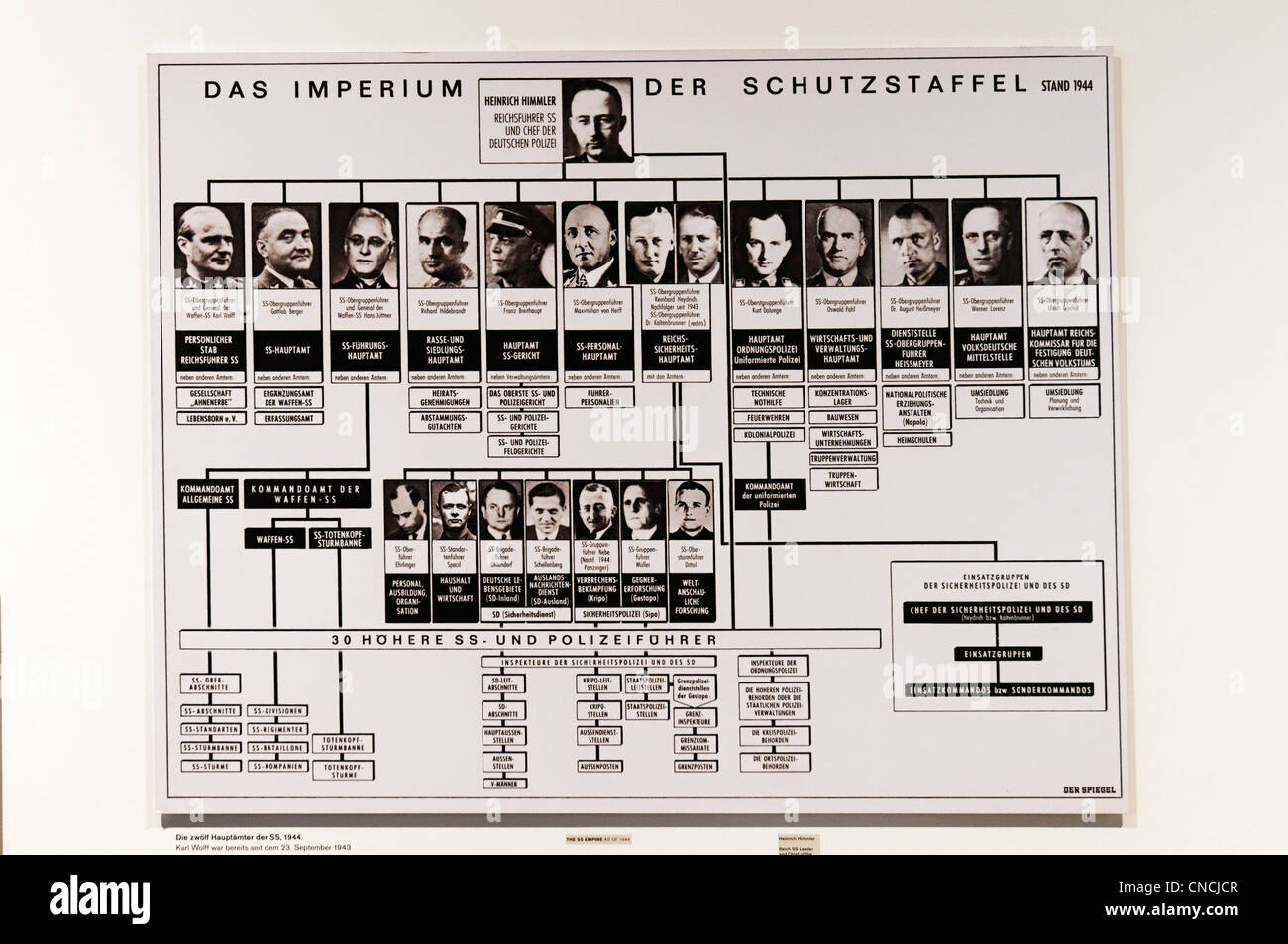A family tree of the SS command structure with Heinrich Himmler at the top - Stock Image