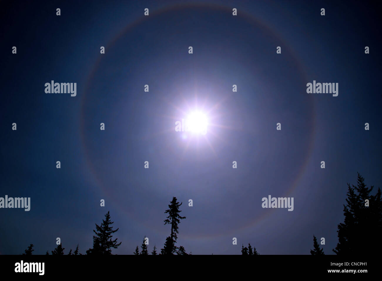 Sunbow around the sun with a blue sky and spruce trees formed when conditions are right with moisture in the air. - Stock Image