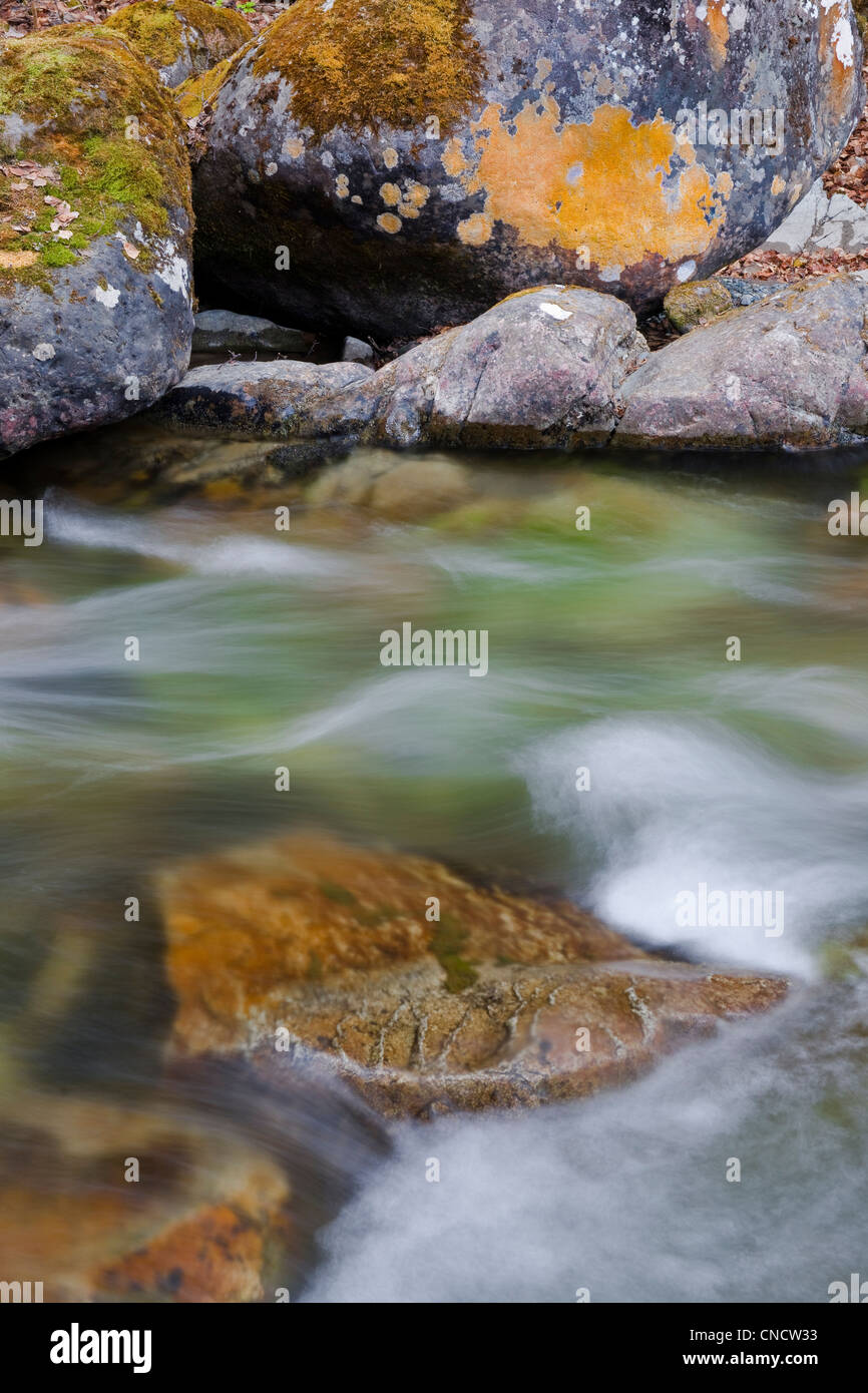 Close up of flowing water in the South Fork of Eagle River with orange lichen on stream rocks, Chugach State Park, - Stock Image