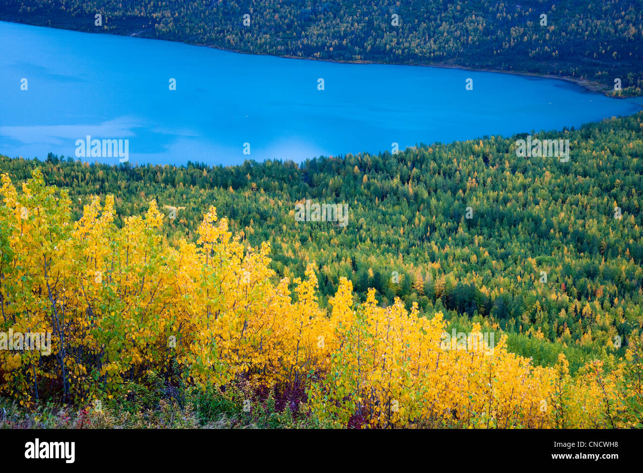 View overlooking Eklutna Lake and Fall colored trees, Chugach State ...