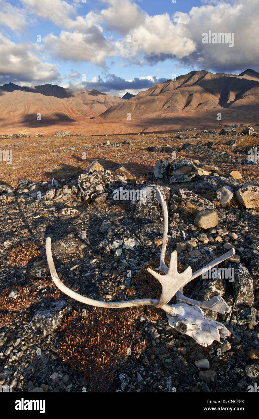 Scenic view of John River valley with caribou antlers in the foreground, Gates of the Arctic National Park & - Stock Image