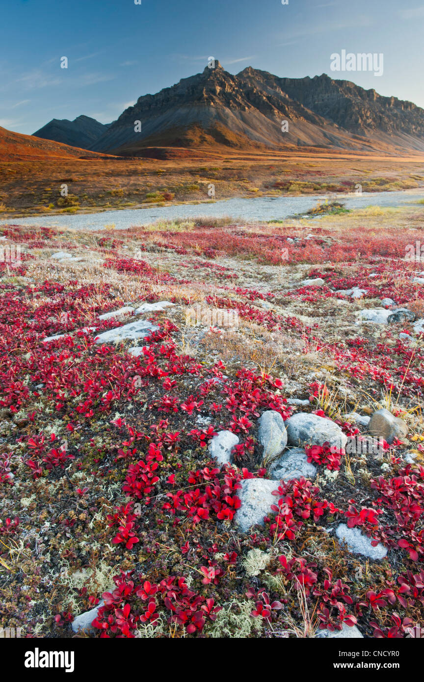 Scenic view of red Bear Berry foliage and mountains, Anaktuvuk Pass in Gates of the Arctic National Park , Alaska - Stock Image