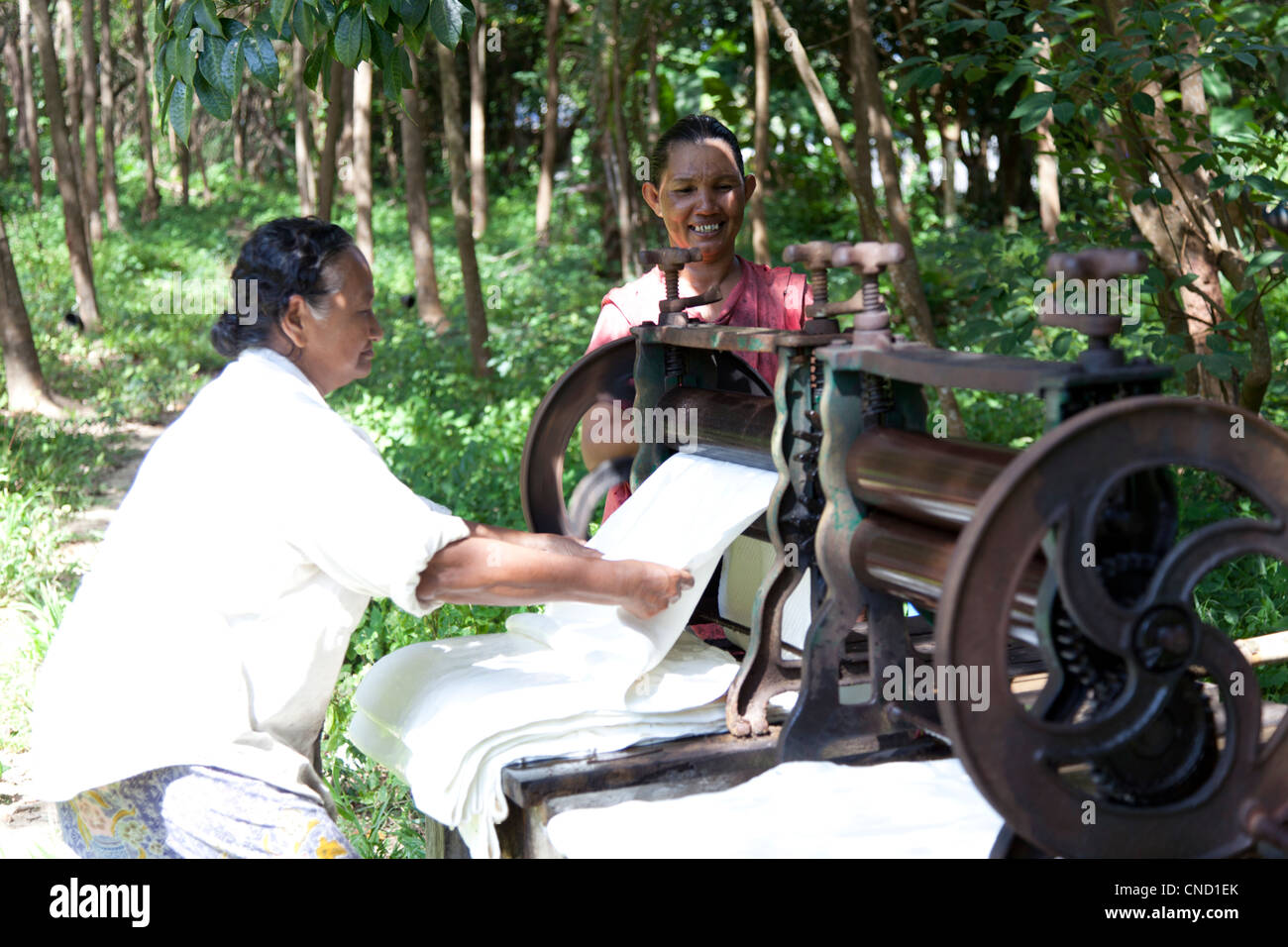 Thai women wringing fresh rubber sheets in a mangle machine (Thailand). Thaîlandaises essorant des plaques - Stock Image