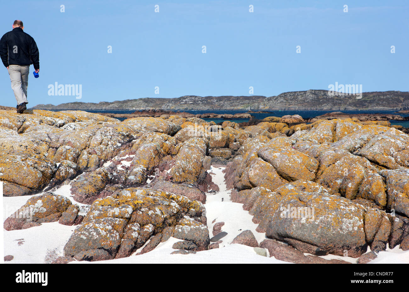 Man on pink granite rocks speckled with yellow lichen in the west coast of Scotland - Stock Image