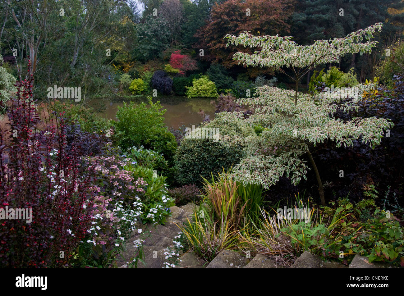 Steps lead down past colourful flower beds to the lake at The Dingle Garden with beautiful trees on the far bank - Stock Image