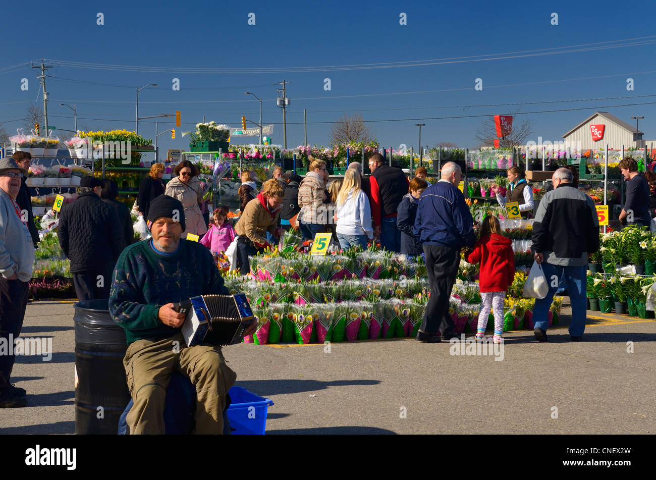 Accordion busker with flower shoppers at the outdoor open St Jacobs Farmers Market in Ontario - Stock Image