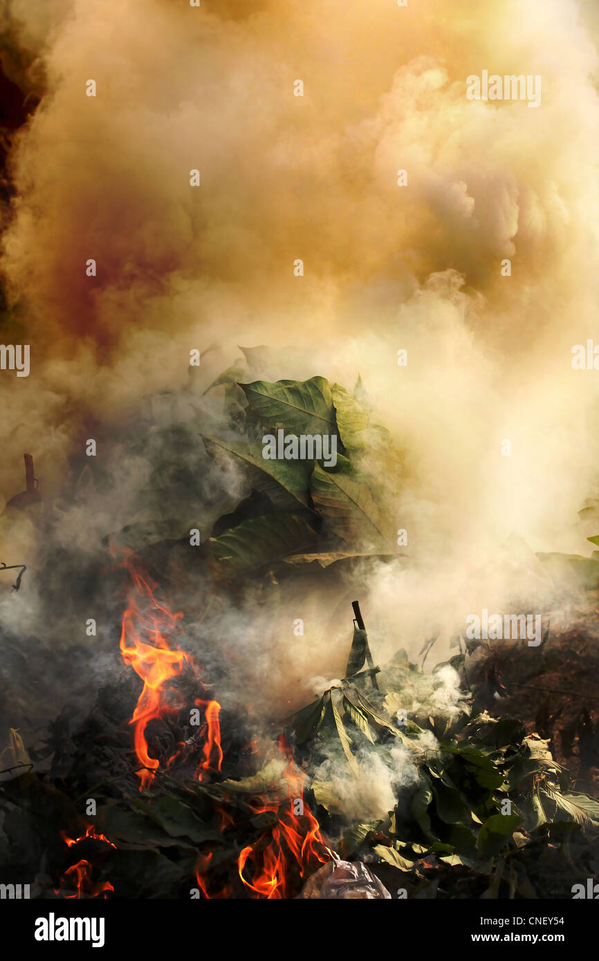 Plants, plastic and hazardous materials on fire emitting toxic and poisoinous fumes and polluting environment - Stock Image