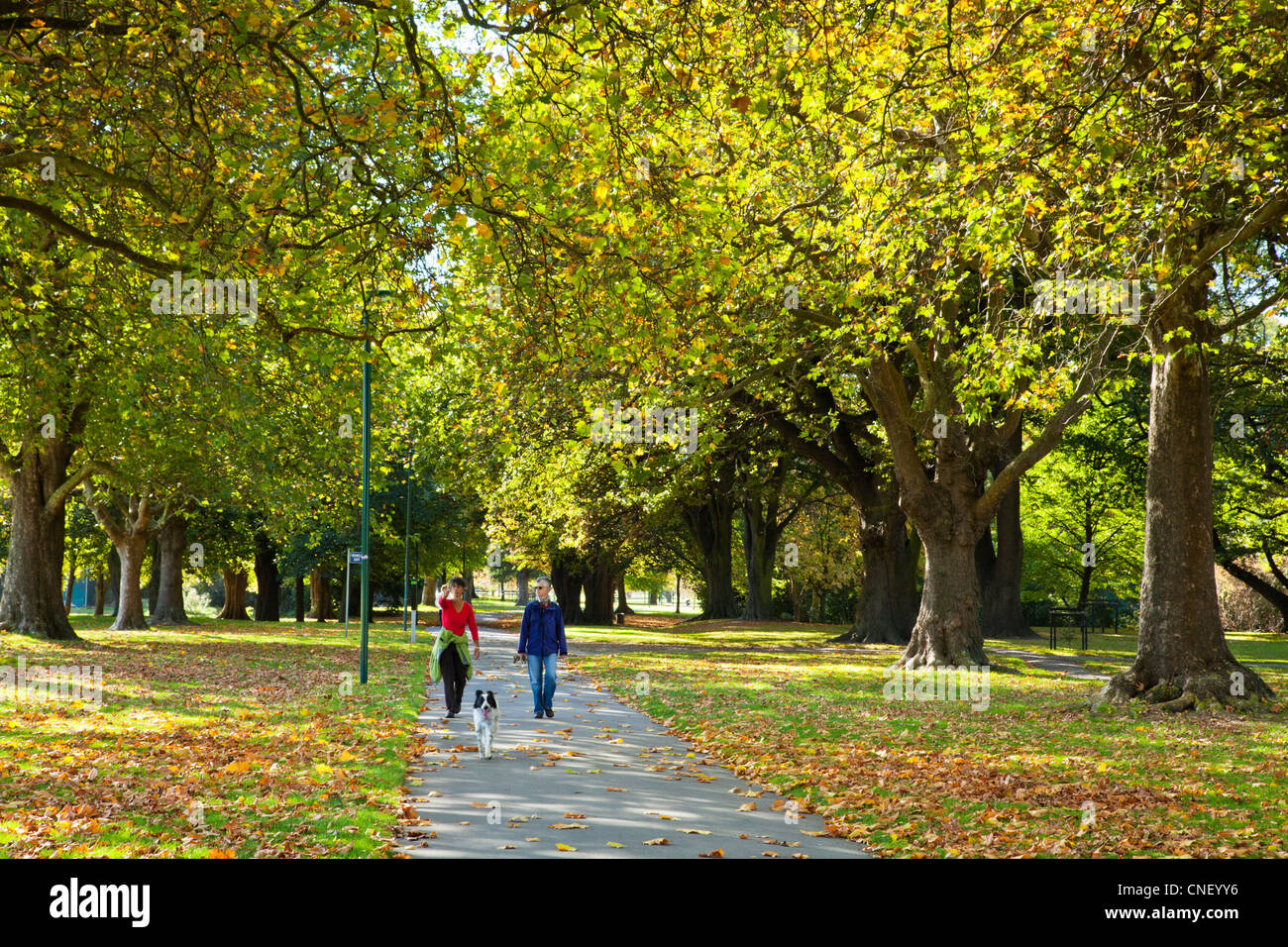 Hagley Park The Avenue in autumn,couple walking with dog, Christchurch, New Zealand. - Stock Image