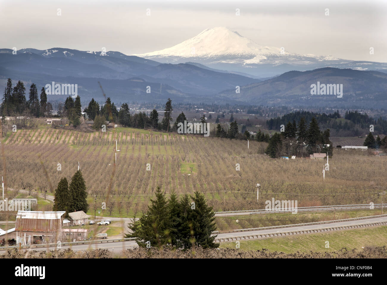 Pear Orchards in Hood River Oregon with Mount Adams - Stock Image
