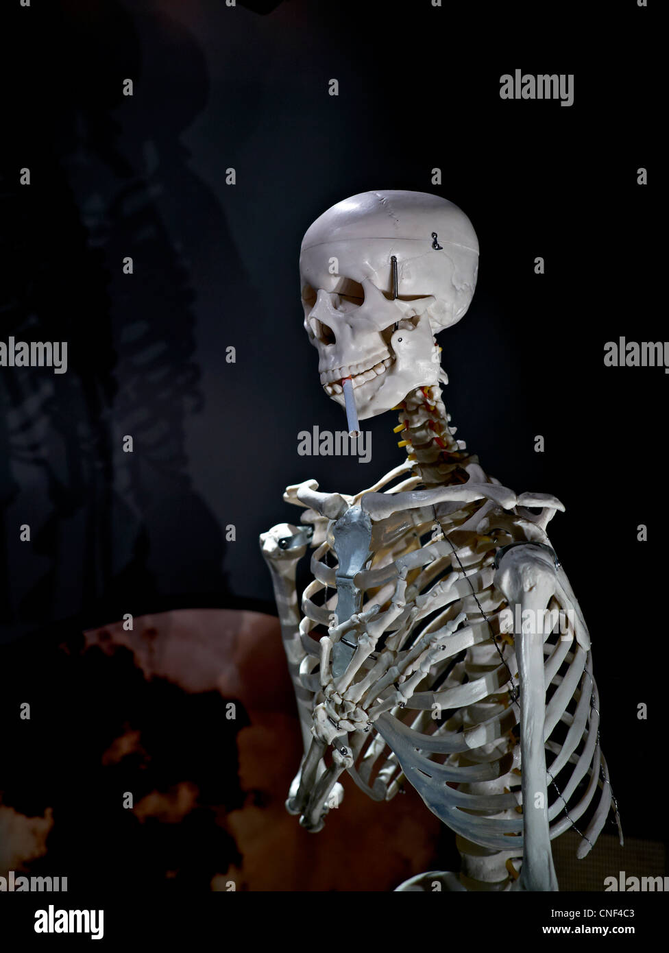 Human skeleton with a cigarette. Concept of the dangers of smoking. - Stock Image