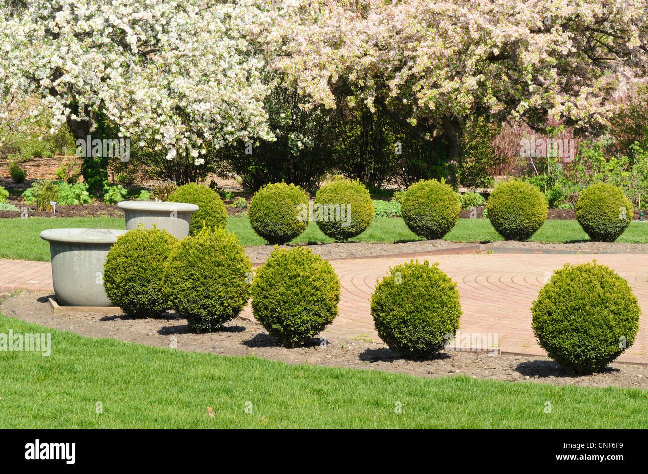 Arc of circular shrubs in botanical garden - Stock Image
