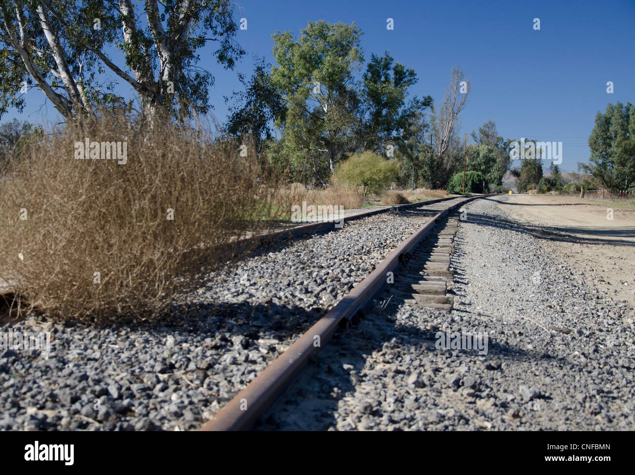 Old, Abandoned Railroad Tracks disappear in the distance. A Tumbleweed rests on the road bed. Trees line the tracks. - Stock Image
