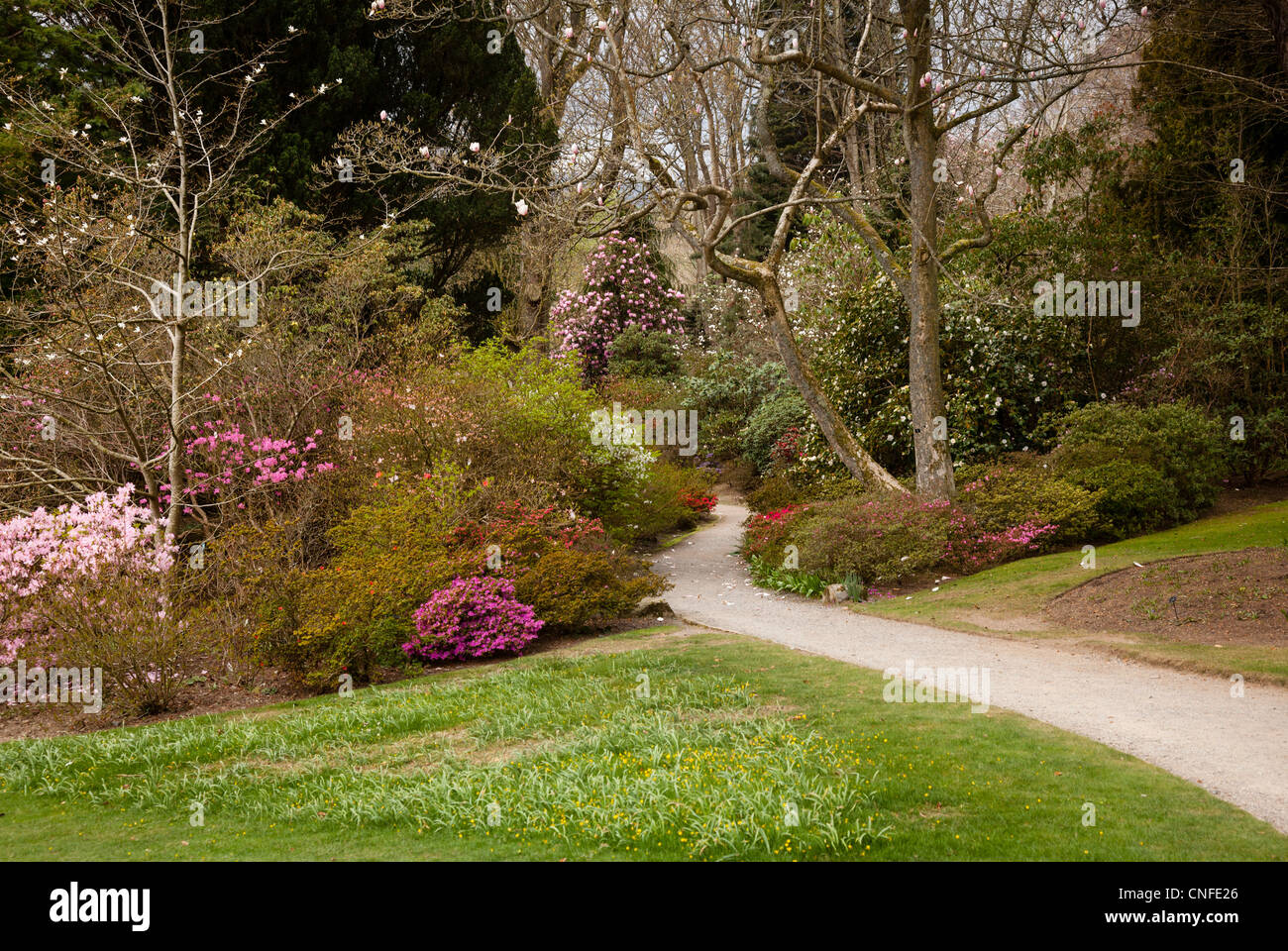 Flowering Bushes Stock Photos & Flowering Bushes Stock Images - Alamy