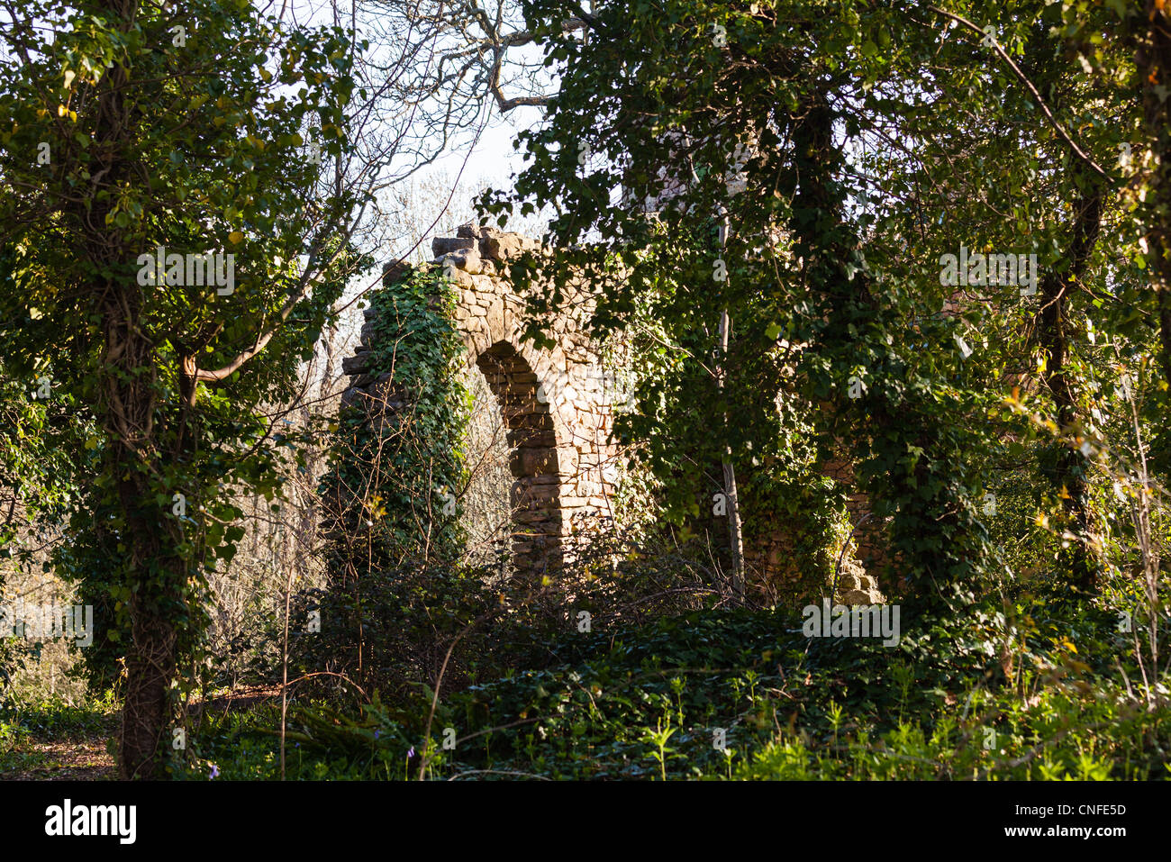 Forest trees overgrow walls of ruined castle - Stock Image