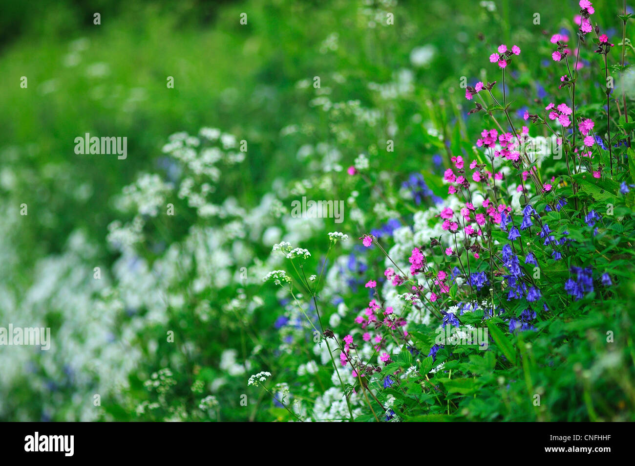 Bank Of Wild Flowers Stock Photos Bank Of Wild Flowers Stock