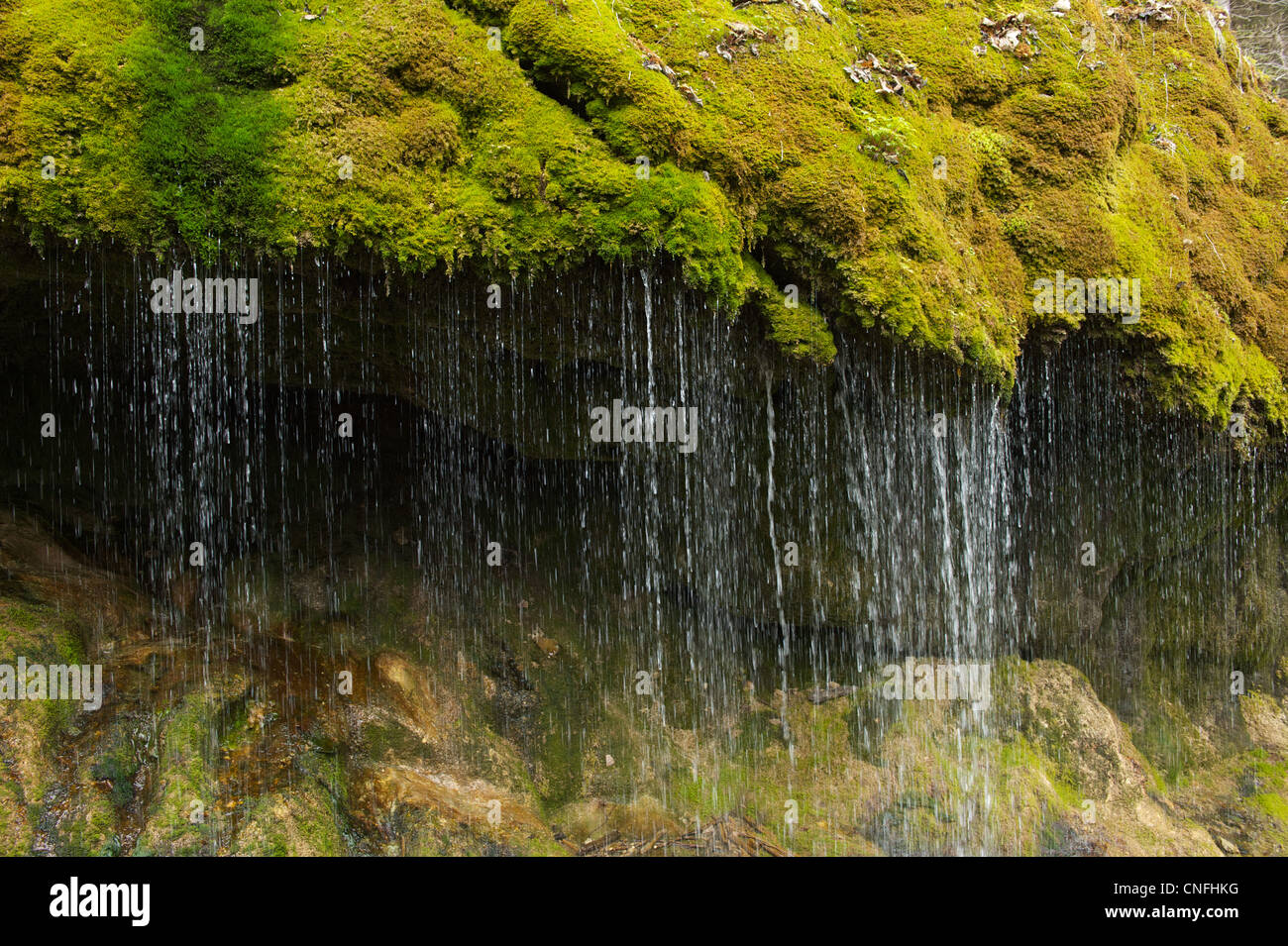 Water falls like a curtain from a mossy ledge in the Wutach Gorge - Stock Image