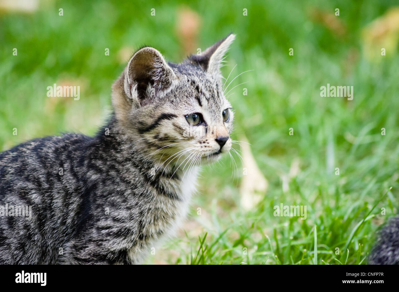 Cats and kittens in the garden. - Stock Image