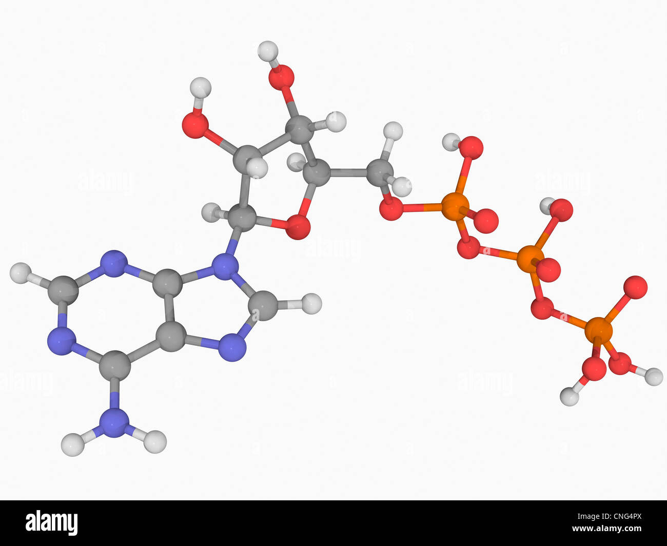 Adenosine triphosphate molecule Stock Photo
