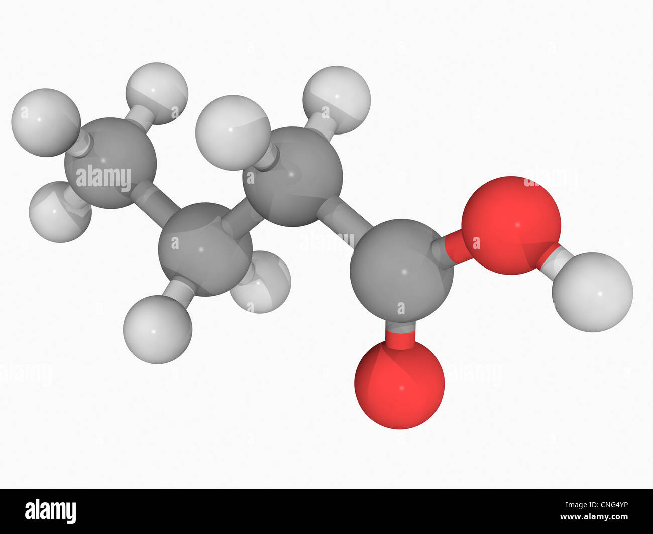 Butyric acid molecule - Stock Image