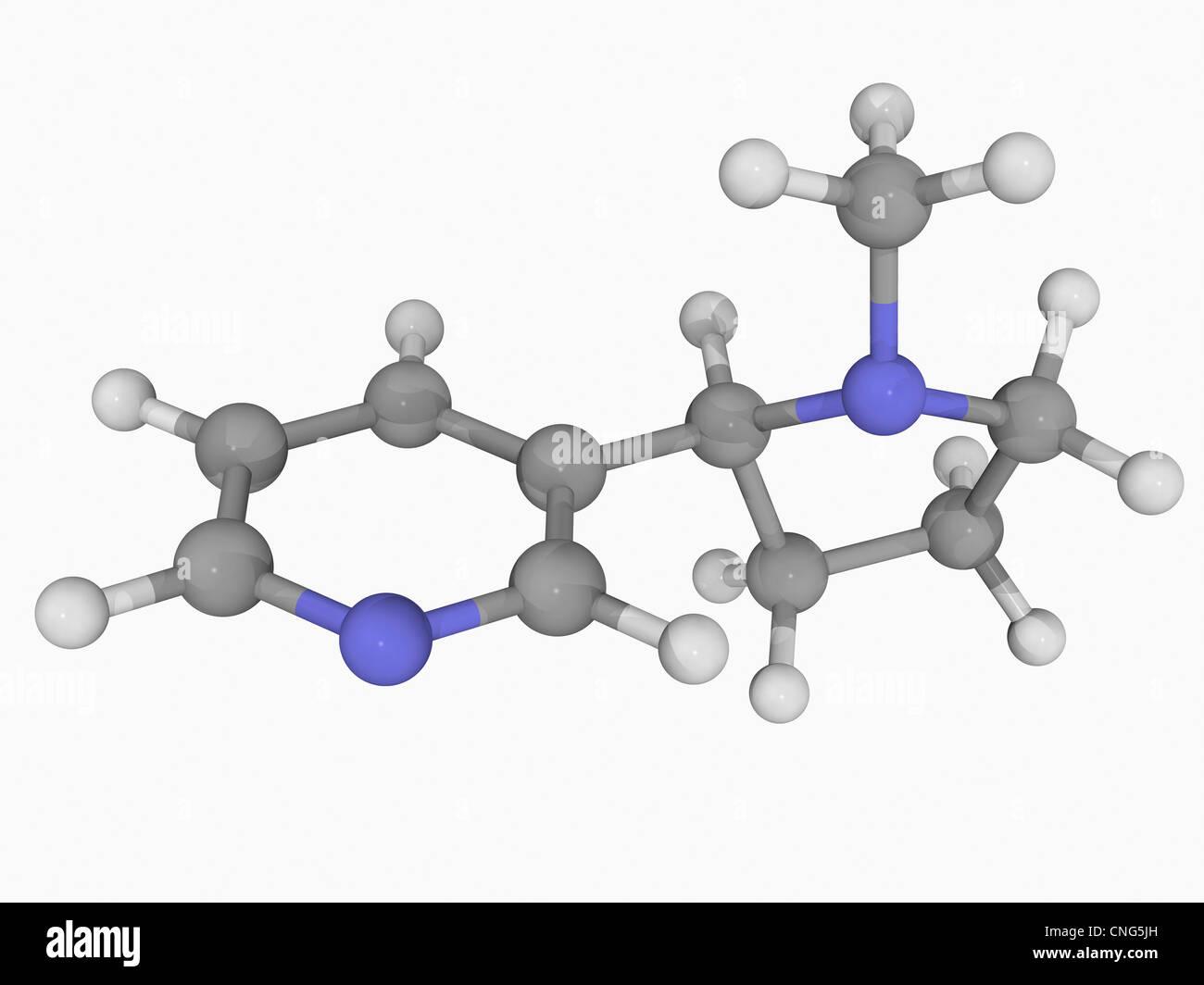 Nicotine molecule - Stock Image