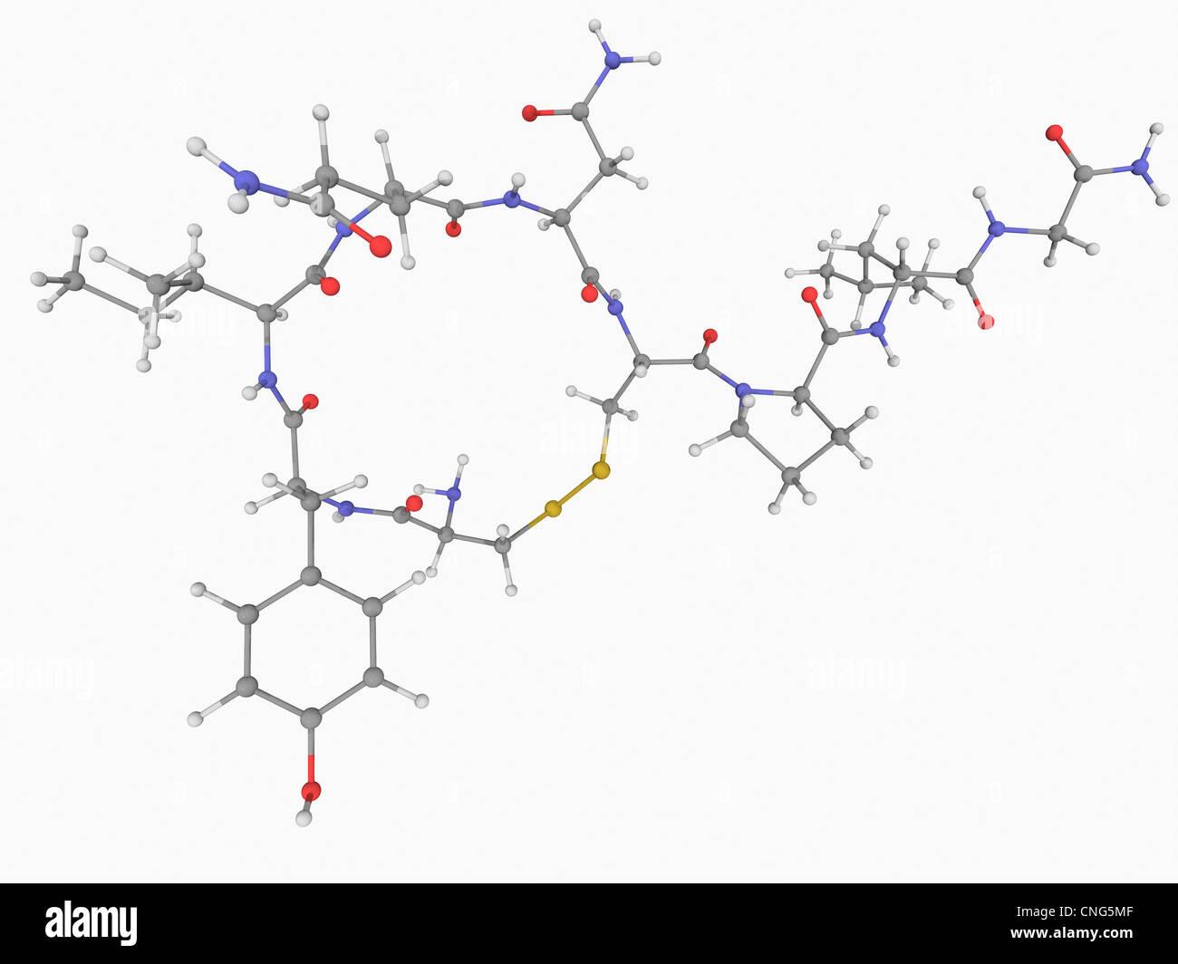 Oxytocin hormone molecule - Stock Image