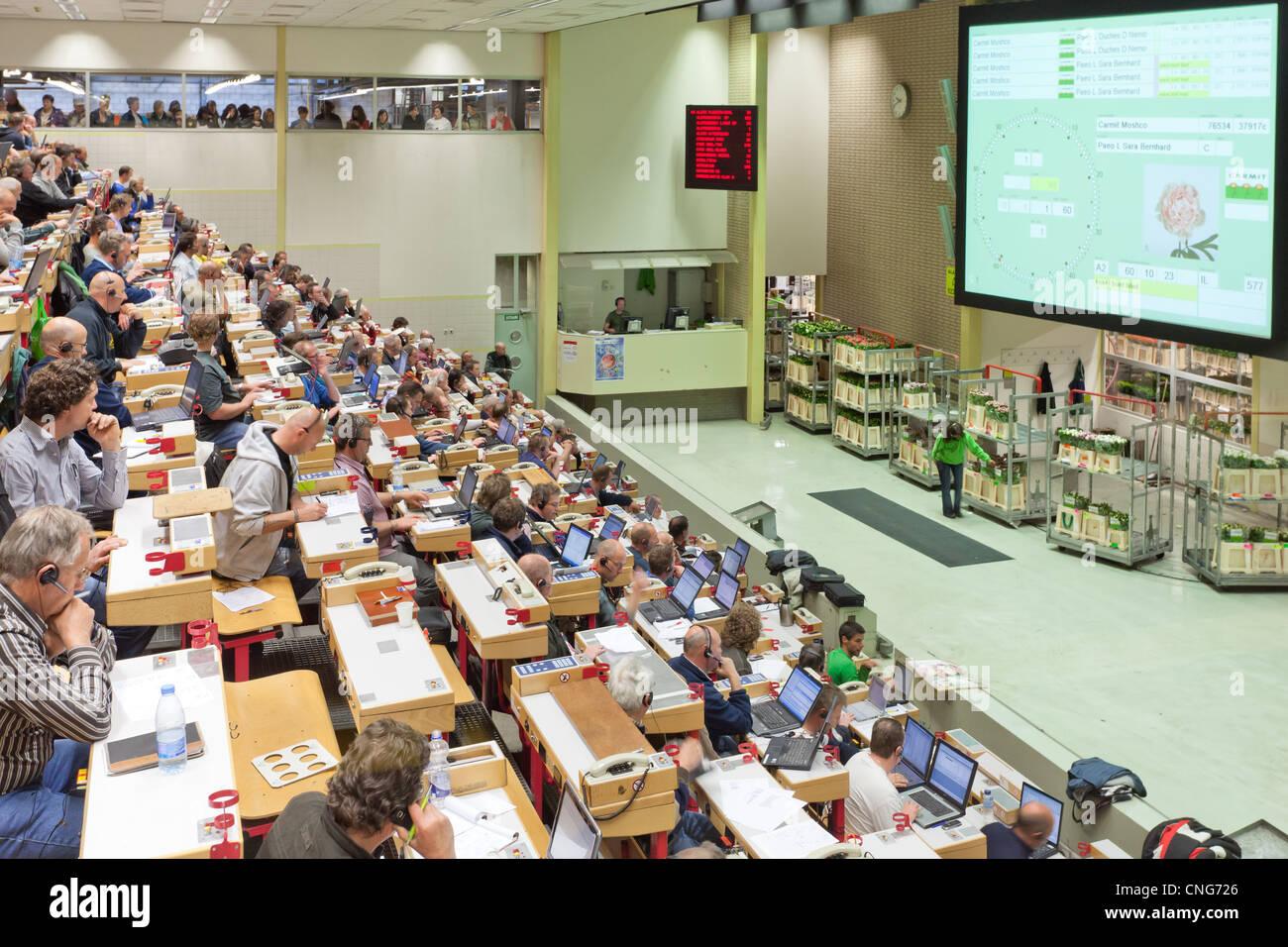 Holland, Aalsmeer, Aalsmeer flower auction, the Dutch Bloemenveiling Aalsmeer. In the auction house. - Stock Image