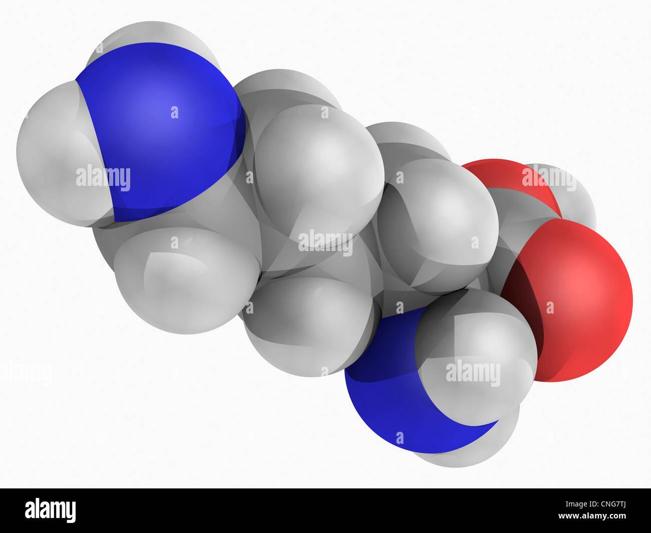 Lysine molecule - Stock Image