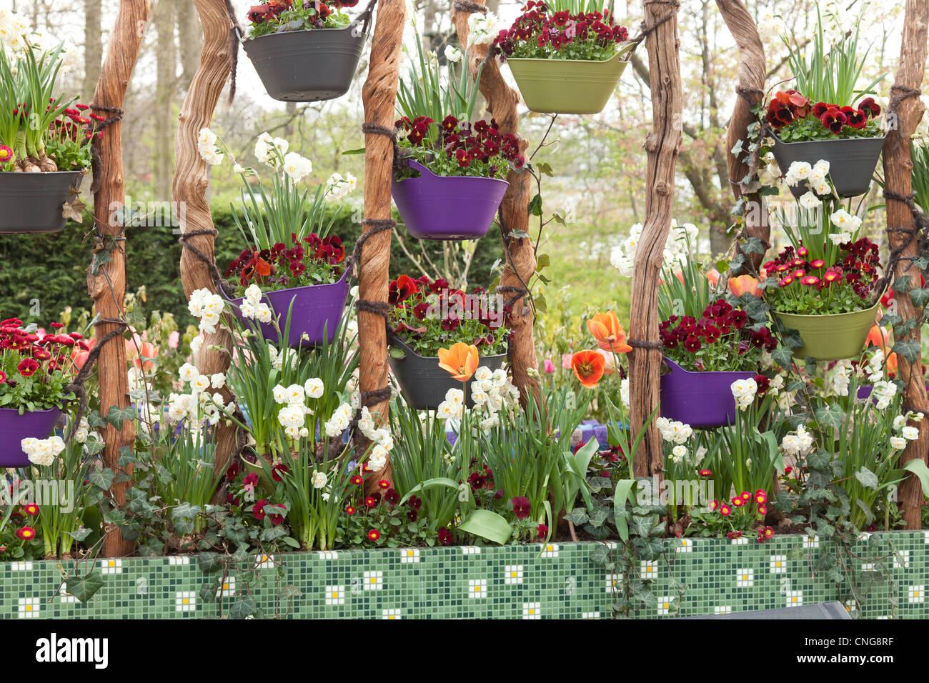 Holland, Lisse, Keukenhof, hanging pots with Pansies. - Stock Image
