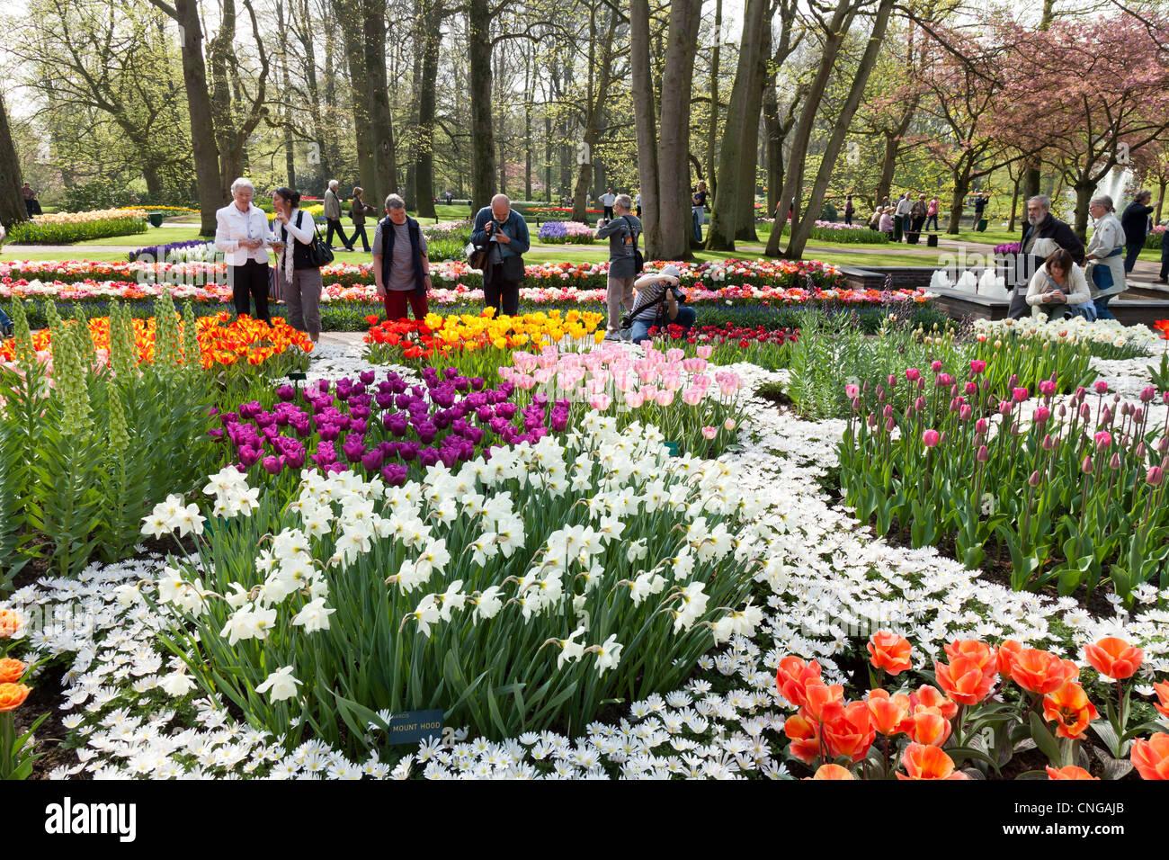 Holland, Keukenhof, flowerbed with tulips, daffodils, Anemone blanda (Grecian Windflower) and visitors. - Stock Image