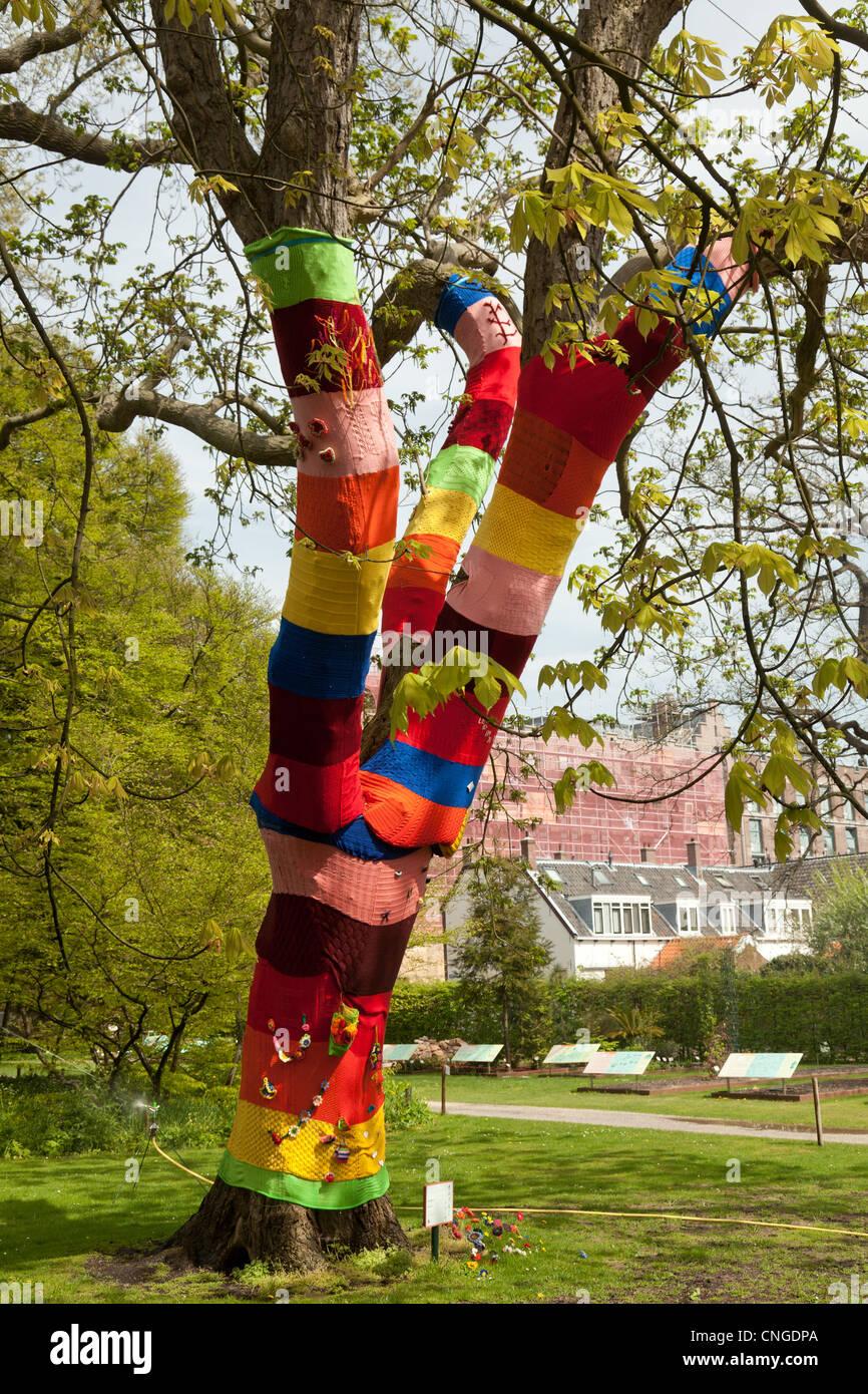 Holland, Leyden, Hortus Botanicus, Japanese Walnut (Juglans ailantifolia) dressed in wool. - Stock Image