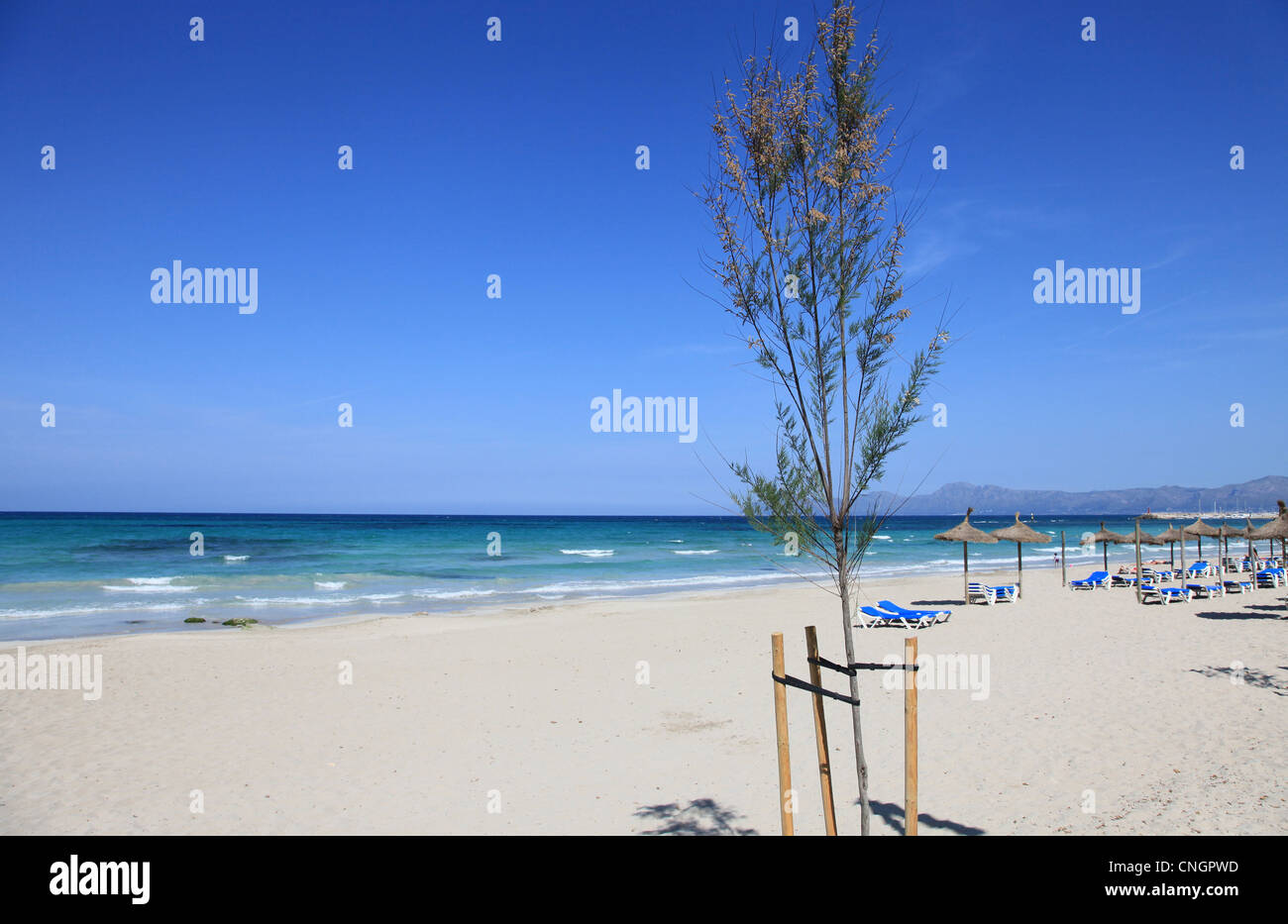 The wide and sandy beach at C'an Picafort on the Balearic Island of Mallorca, Spain - Stock Image