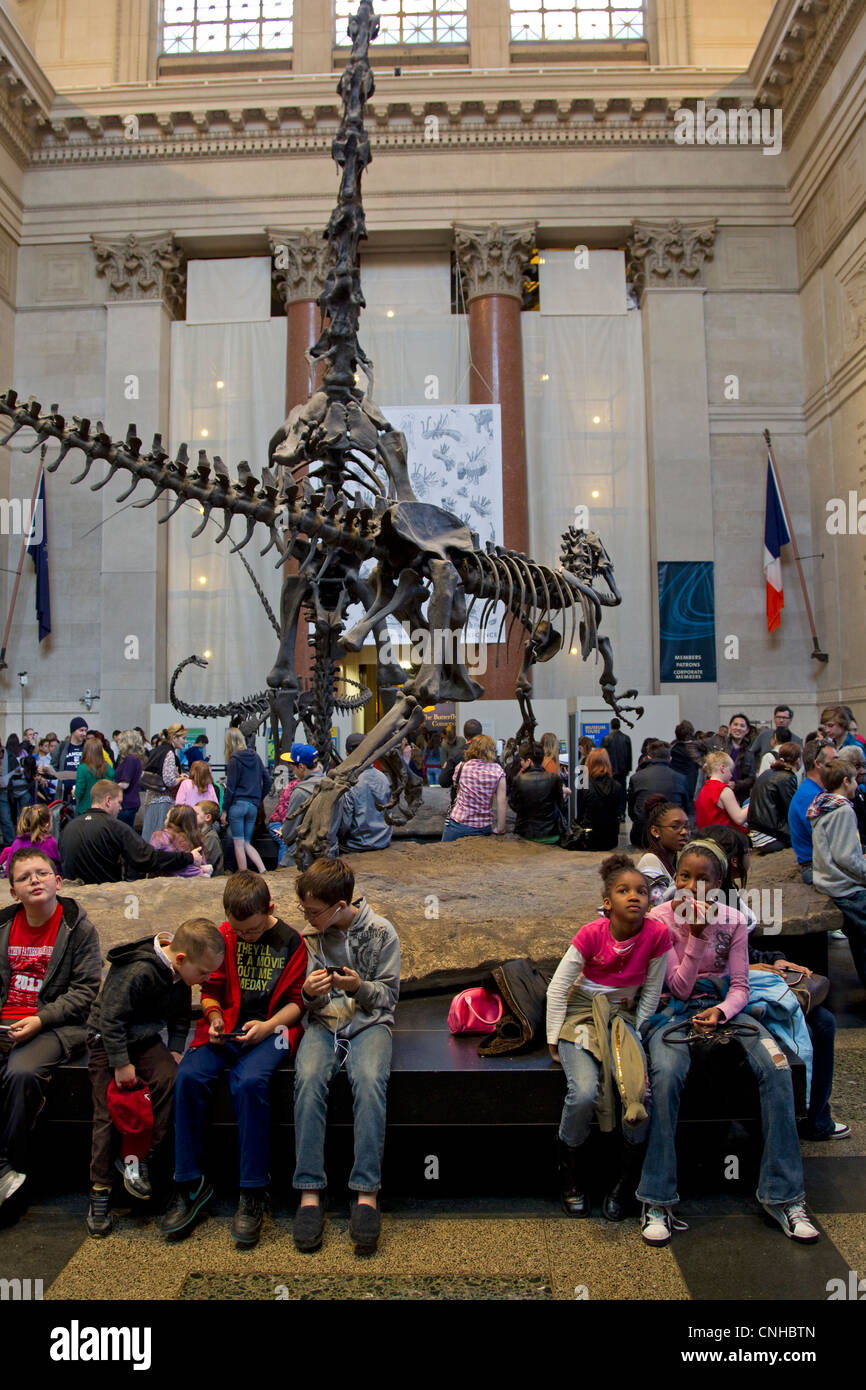 American Museum of Natural History lobby with school children and other visitors, New York City, NYC - Stock Image