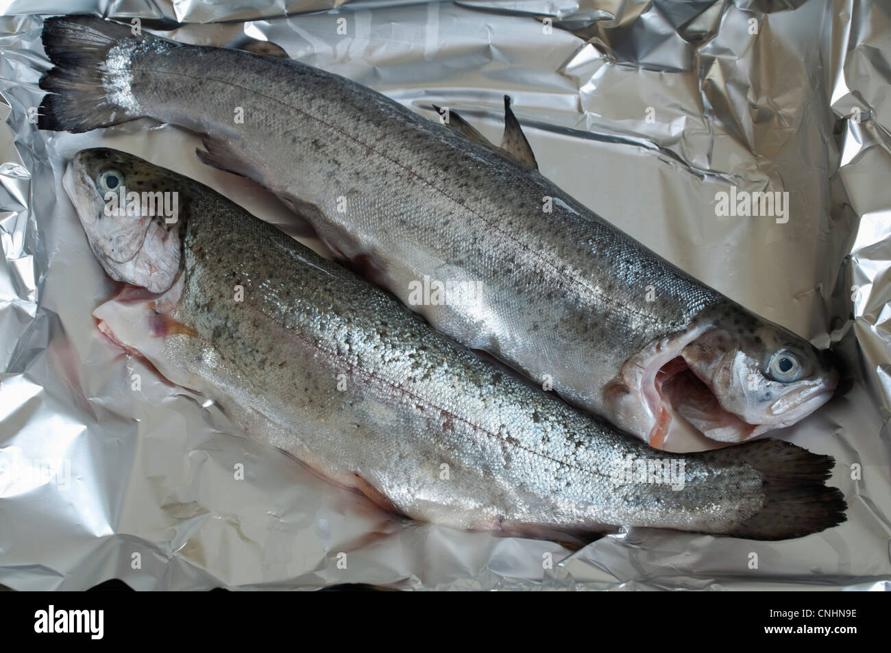 Rainbow Trout - two raw fresh wet fish - placed in a dish covered in foil, in  preparation for cooking / baking. - Stock Image